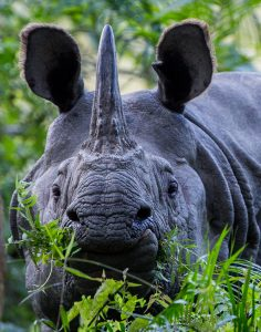 Empowerment for rhino conservation – are we in the right direction?