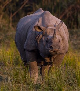 Rhino poachers – the new avatar