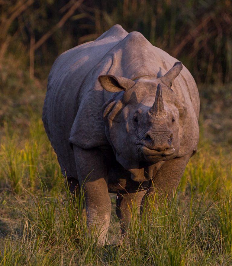 Rhino poachers – the new avatar